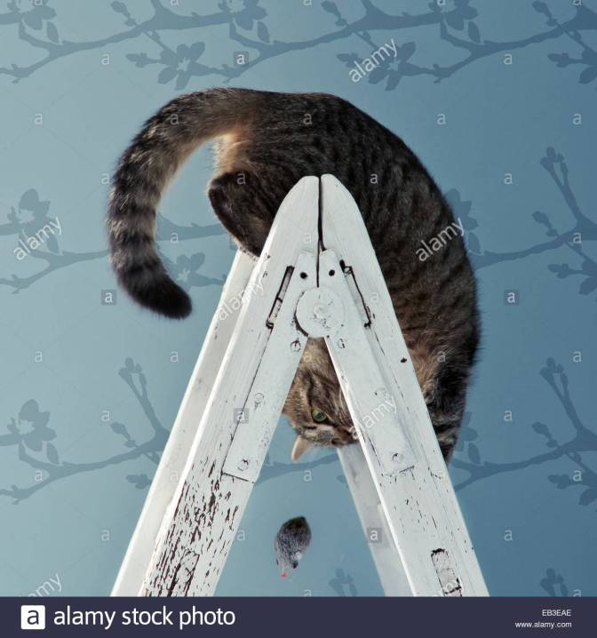 cat-on-ladder-upside-down-EB3EAE